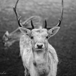 Rudolf.