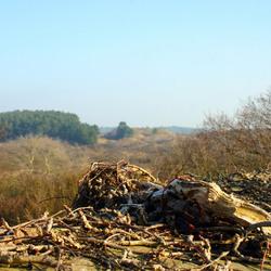 Duinlandschap bij Overveen