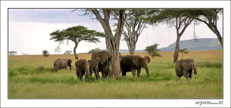 Bewerking: Familie olifant 2 - Hoi Monigue. Ben zo vrij geweest om een paar veranderingen in jou foto aan te brengen. Heb er in de hoog en laaglichten