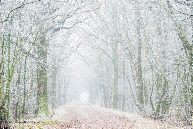 Winterlaantje... - Genomen bij het Bargerveen....op een ontzettend koude ochtend met rijp en vorst...<br />