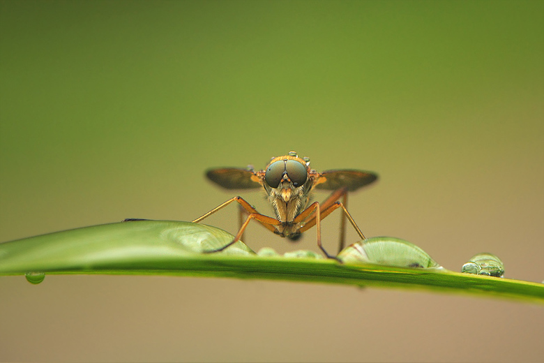 alien - insect na een regenbui