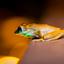 frog at night