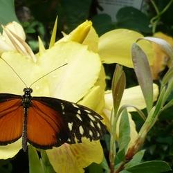 Geen mooie vlinder