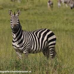 Wat is een zebra toch attent!