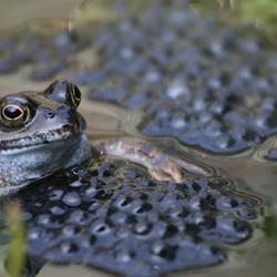 Protective frog