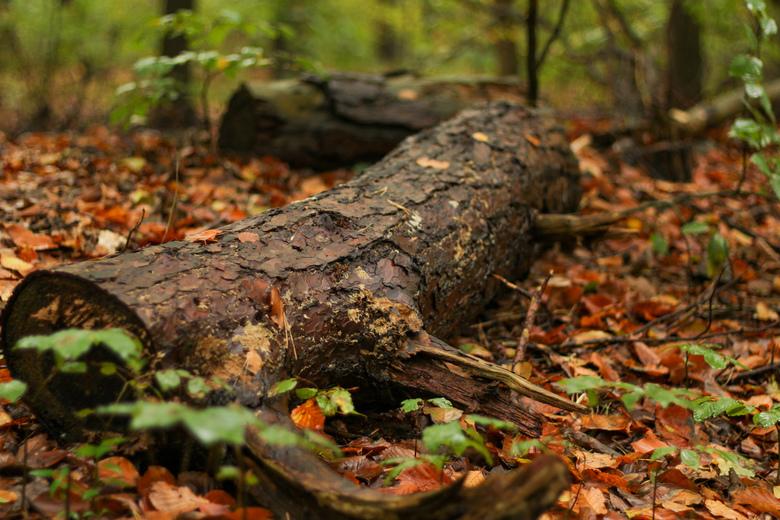 Autumn in the forrest - Boomstronk in de herfst