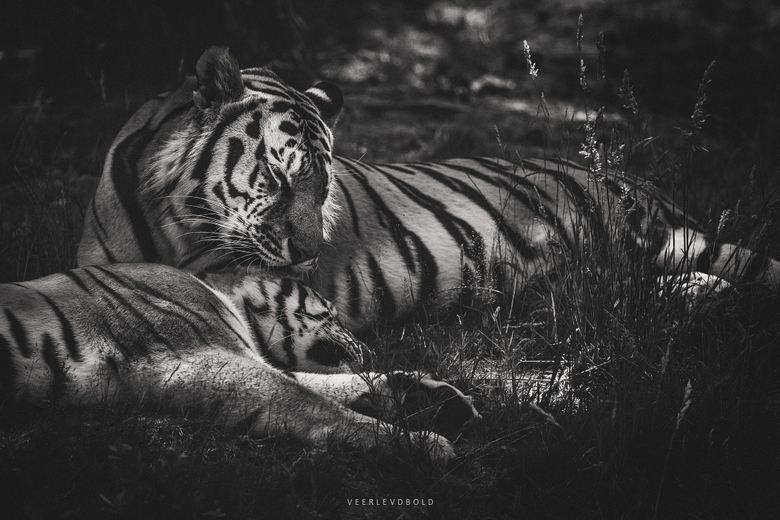 Mothers Love -