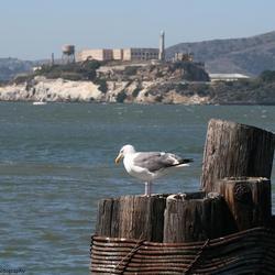 Escaped from Alcatraz