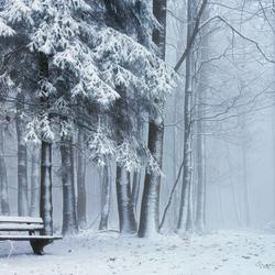 White Silence.