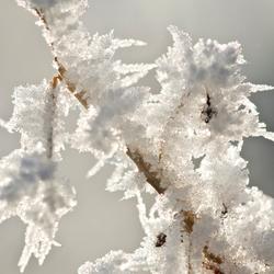 Merry Winter