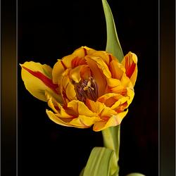 """Blooming"" on Sunshine"