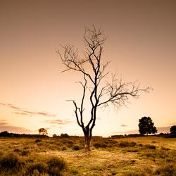 Een dode boom, net na zonsondergang op de Hilversumse heide...