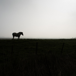 Eenzaam paard