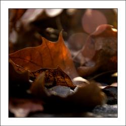 the last leaves....