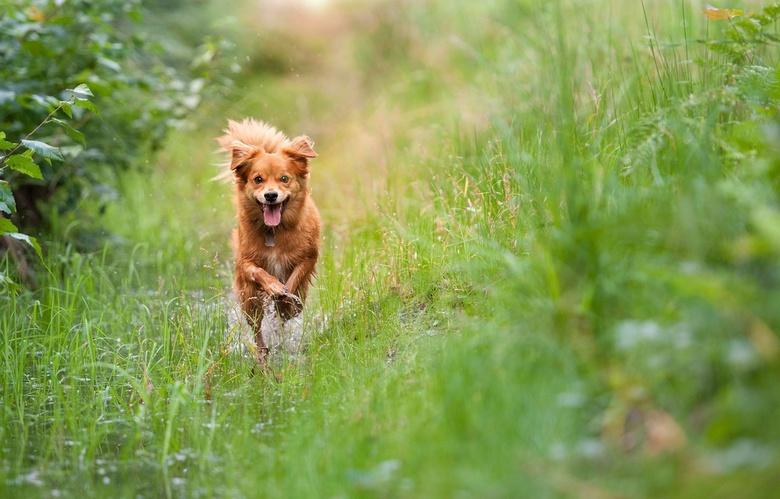 Happy Dog - Vroeg in de morgen, heerlijk door de sloot rennen.