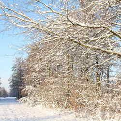 sneeuw 2010 goudse hout
