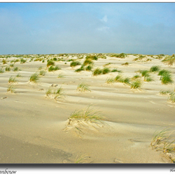 Duinen in wording