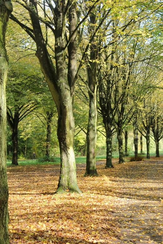 Amsterdamse bos - Amsterdamse bos