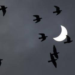 Zonsverduistering met 20 mrt met birds
