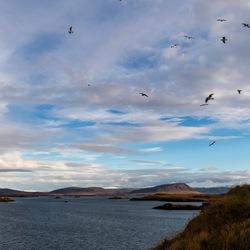 'Birds flying high'