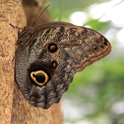 Beautifull butterfly...