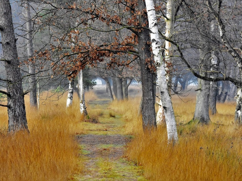 Boswandeling - prachtig dat  herfstweer deze dagen van november