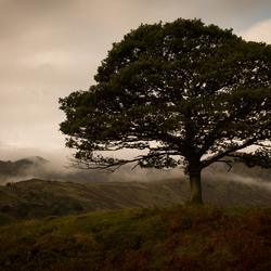 Scottish lonely tree