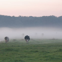 Avondschemering in Den Haag, landgoed reigersbergen