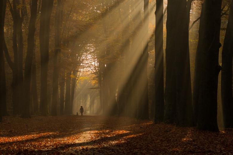 In de zon - Wat lijkt het alweer lang geleden dat de zon nog scheen in het bos.<br /> <br /> Heel erg bedankt voor al jullie leuke en lieve reacties
