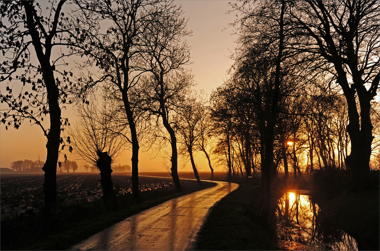 zonsondergang. - zonsondergang tussen de bomen.