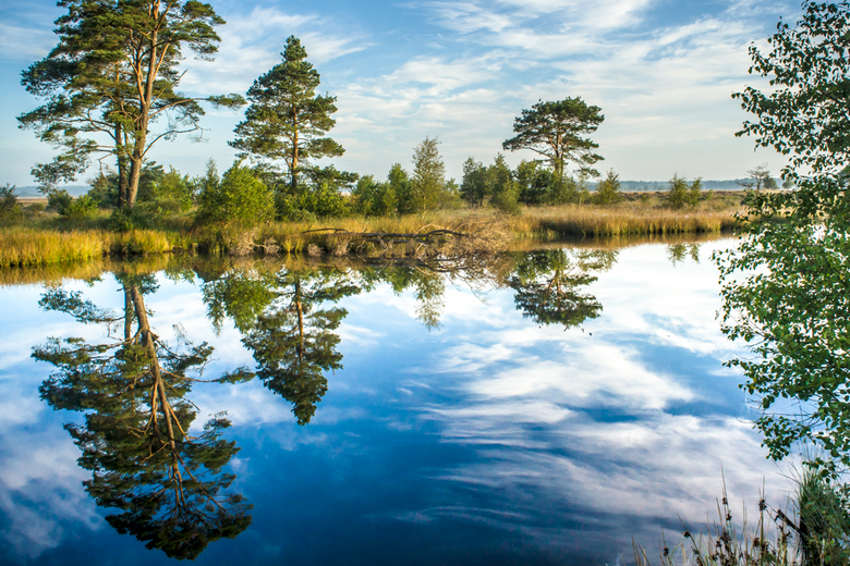Dwingelderveld - Reflectie