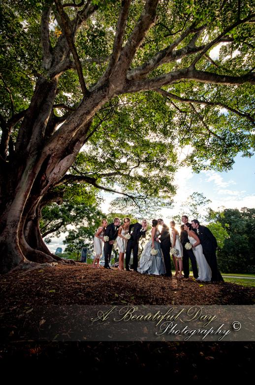 Wedding - Mooie boom.