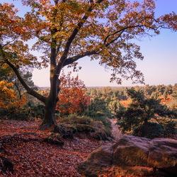 Herfst op de lemelerberg