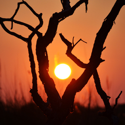 Sunrise Branch