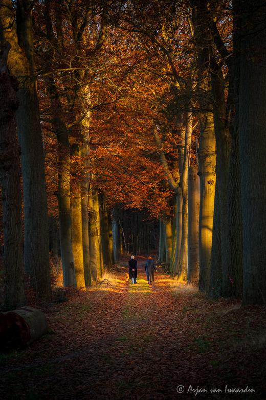 An Autumn Walk -