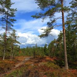 stukje bos