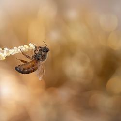 Queen bee...