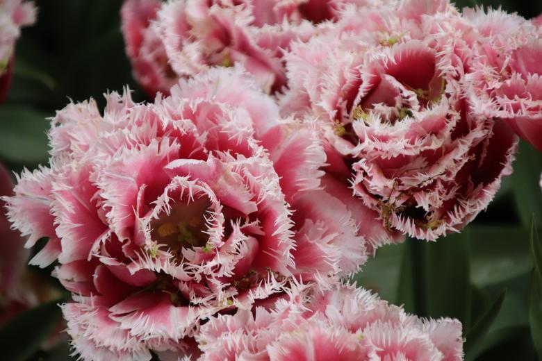 Flowerpower -