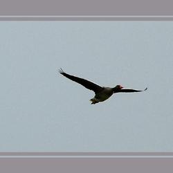 asynchroon vliegen