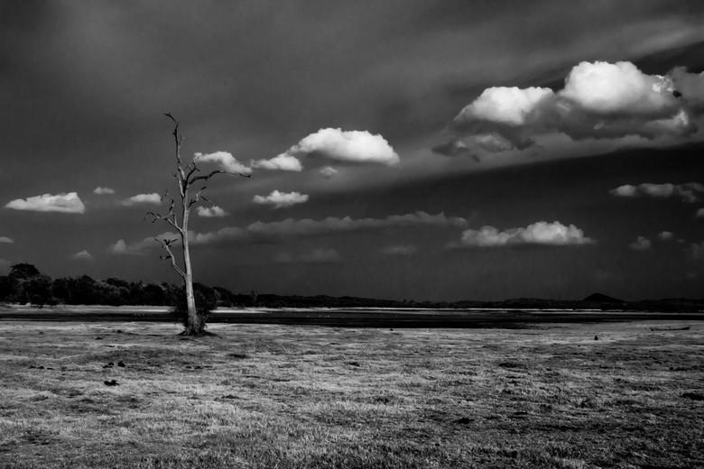 The tree - Opvallend landschap in Minneriya National Park