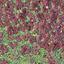 HG6_5997 Rood en groen