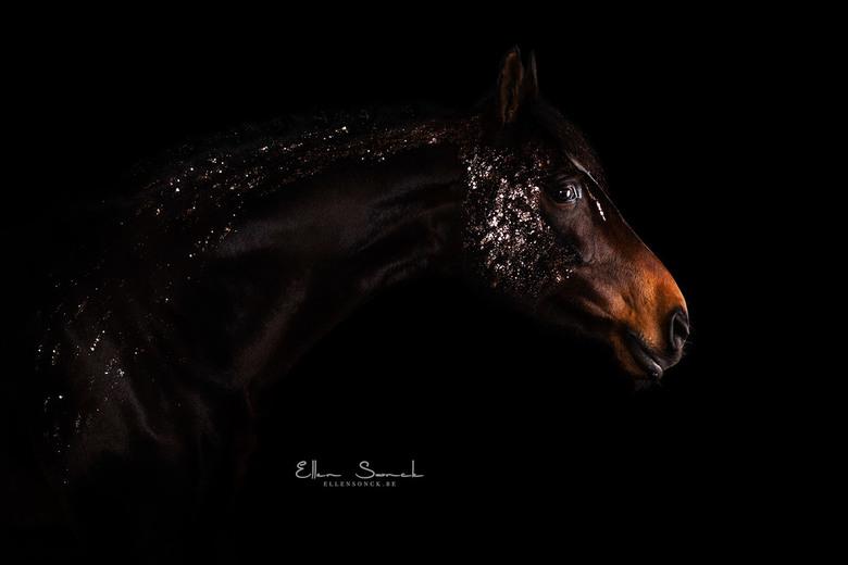 Glitterpaard - Eerste keer gefotografeerd met glitter op een paard én in studio. Geeft een klein aritistiek kantje. Bamaris was een voorbeeldig modelp