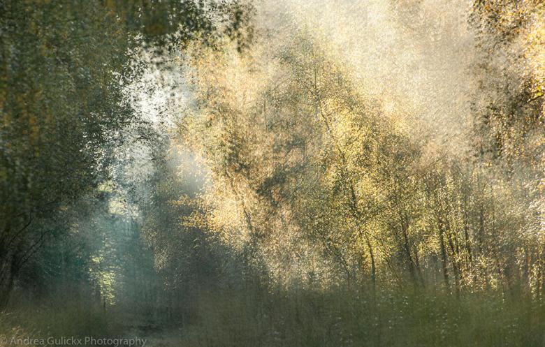 Forest Vibes - Naast water blijven ook bomen en het bos me fascineren. Het licht was magisch vanochtend. iedereen bedankt voor de leuke verschillende