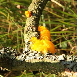 paddenstoel2