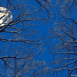 De maan en bomen