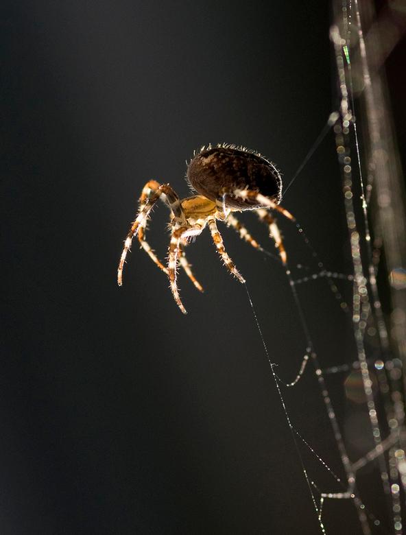 Working spider -