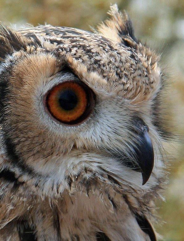 UIL - Vogel is gespot in het Holwerder bos