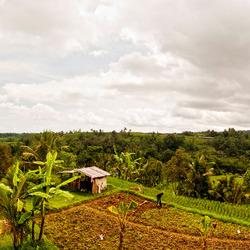 Unesco rijstvelden Bali