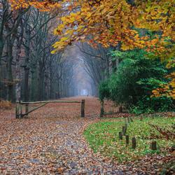 herfst in het Corversbos (Hilversum).jpg