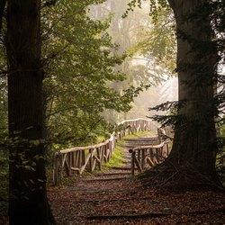 Stairway to autumn